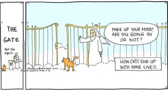 How cats end up with 9 lives
